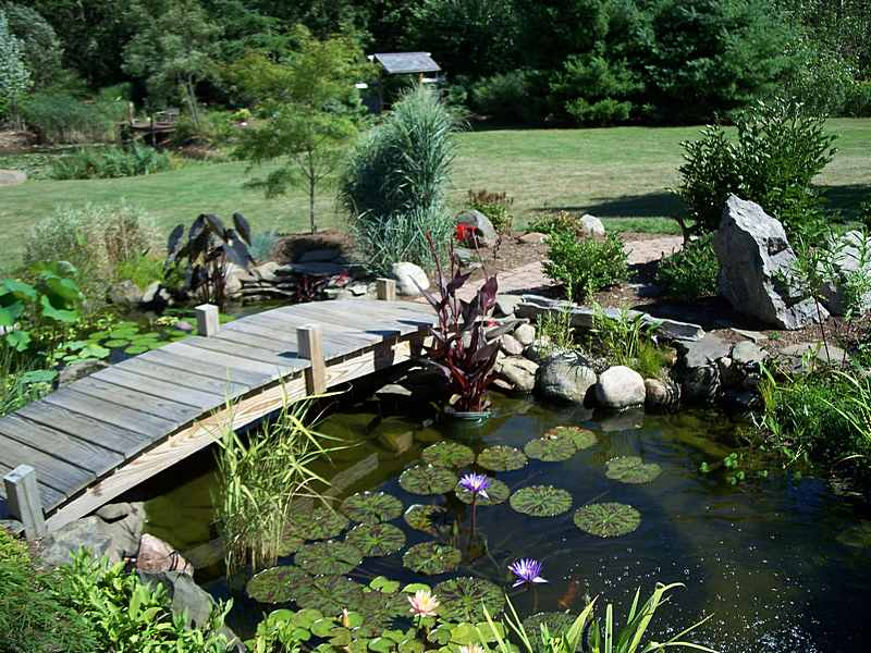 Japanese garden bridge design architecture interior design for Small garden fish pond designs